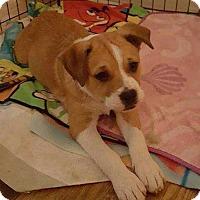 Adopt A Pet :: Anabel_2017 - Virginia Beach, VA