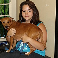 Adopt A Pet :: Jessie - Pompano Beach, FL