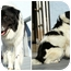 Photo 4 - Border Collie Mix Dog for adoption in San Pedro, California - CLYDE