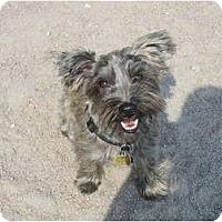 Adopt A Pet :: JJ - Toronto/Etobicoke/GTA, ON