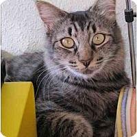 Adopt A Pet :: Matsu - Davis, CA