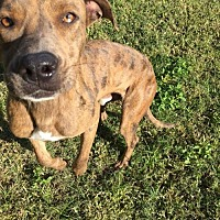 Adopt A Pet :: Stan - Lake Placid, FL