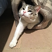 Adopt A Pet :: Colby - Columbia, MD