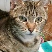 Adopt A Pet :: Averill - Salem, OR