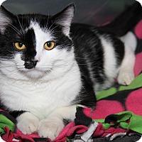 Adopt A Pet :: Fritz (Neutered) - New Photos - Marietta, OH