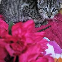 Adopt A Pet :: Tulip - Mocksville, NC