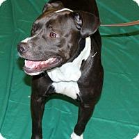Adopt A Pet :: Baby Girl - Fort Wayne, IN