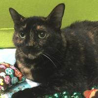 Adopt A Pet :: Mimi - Metairie, LA