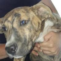 Adopt A Pet :: Lynn - Savannah, TN