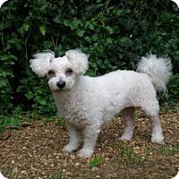 Adopt A Pet :: KATIE GRACE - Franklin, TN