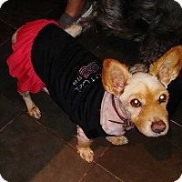 Adopt A Pet :: SPONSORS NEEDED Miss Dixie - Freeport, NY