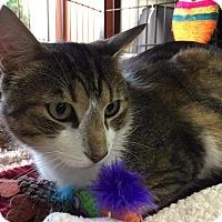 Adopt A Pet :: Zaremba - CLEVELAND, OH