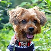 Adopt A Pet :: Ely - West Milton, PA