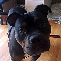 Adopt A Pet :: Rocky - Ridgefield, CT