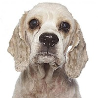 Adopt A Pet :: Jax - Fort Lauderdale, FL