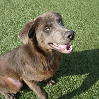 Adopt A Pet :: Vince - North Richland Hills, TX