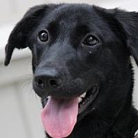 Adopt A Pet :: Princess - Yardley, PA