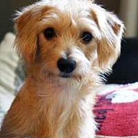 Adopt A Pet :: Dusty Roads - Newport, KY