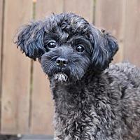Adopt A Pet :: Cole - Korean Slaughterhouse - Los Angeles, CA