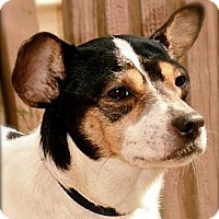Adopt A Pet :: Toby - Hastings, NY