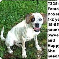 Adopt A Pet :: # 335-11 @ Animal Shelter - Zanesville, OH