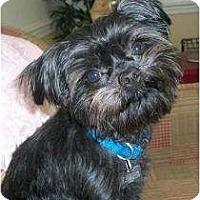 Adopt A Pet :: T-Tiny - ADOPTION PENDING - Jackson, MS