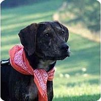 Adopt A Pet :: Lucy - Honaker, VA