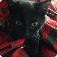 Adopt A Pet :: Bernadette - St. Louis, MO