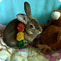 Adopt A Pet :: DaVinci - Williston, FL