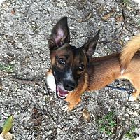 Adopt A Pet :: Moose - Coral Springs, FL