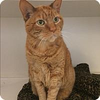 Adopt A Pet :: Zucca - Novato, CA