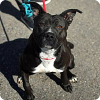 Adopt A Pet :: Lockett - Troy, MI