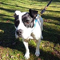 Adopt A Pet :: Hooch - Blue Ridge, GA