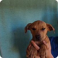 Adopt A Pet :: Panda - Oviedo, FL