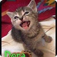 Adopt A Pet :: Dora - 249 / 2017 - Maumelle, AR