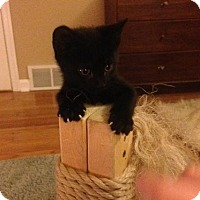 Adopt A Pet :: Fern (MM) - Trenton, NJ