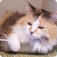 Adopt A Pet :: Whipple - Duluth, MN