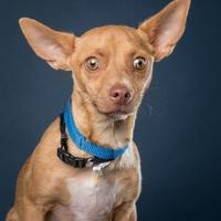 Adopt A Pet :: Jason - Santa Paula, CA
