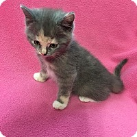 Adopt A Pet :: Isabella - Shelbyville, KY