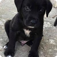 Adopt A Pet :: Lord - Marlton, NJ