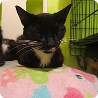 Adopt A Pet :: Bella - Coos Bay, OR