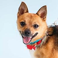 Adopt A Pet :: Mork - Marietta, GA