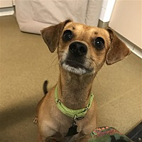 Adopt A Pet :: Shiloh - Riverside, CA