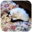 Photo 2 - Domestic Shorthair Cat for adoption in Narberth, Pennsylvania - Lola