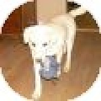 Adopt A Pet :: Abby - Denver, CO