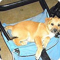 Adopt A Pet :: Boss - York, SC