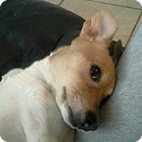 Adopt A Pet :: Baby - Silsbee, TX