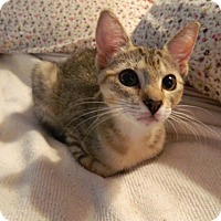 Adopt A Pet :: Mindy - The Colony, TX
