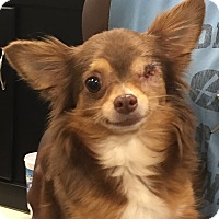 Adopt A Pet :: Cocoa - Orlando, FL
