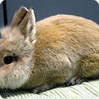 Adopt A Pet :: Munster - Maple Shade, NJ